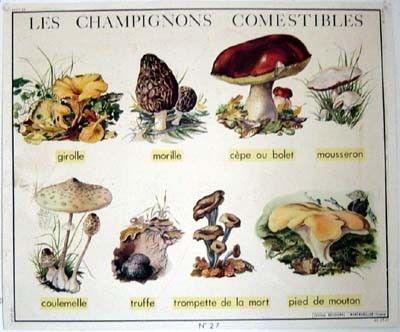 Les champignons - Calendrier des champignons comestibles ...