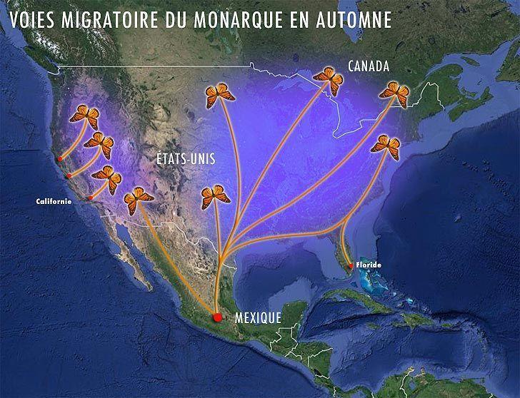 carte-migration-du-monarque-en-automne