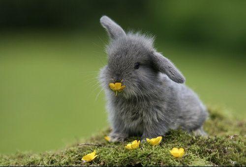 Petit lapin gris - Photo de lapin mignon ...