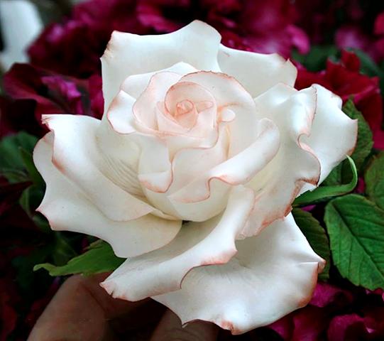 roses blanche. Black Bedroom Furniture Sets. Home Design Ideas