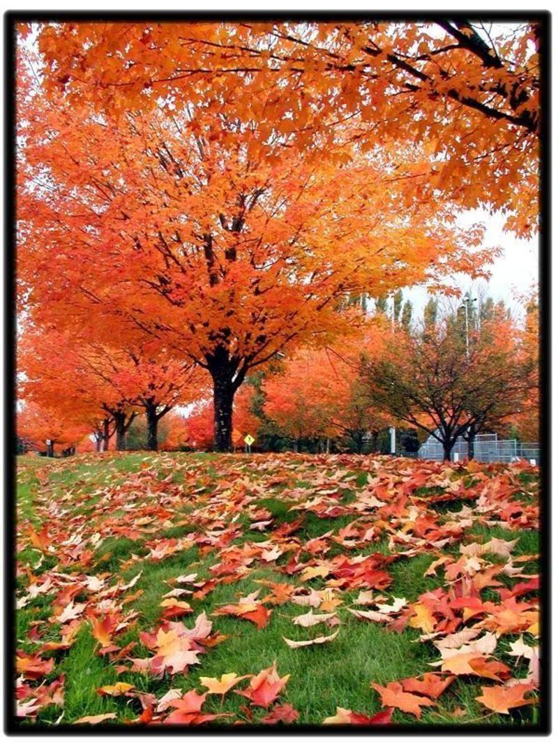 """Résultat de recherche d'images pour """"centerblog belle image de chêne qui tombe les feuilles"""""""